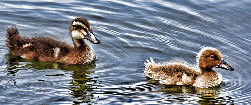 Ugly Duckling by Kristy Ollis