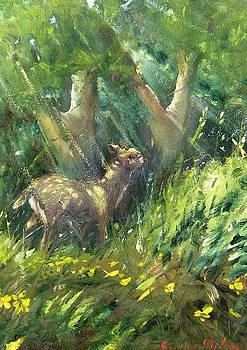 ...un Cerbiatto by Sandro  Mulinacci