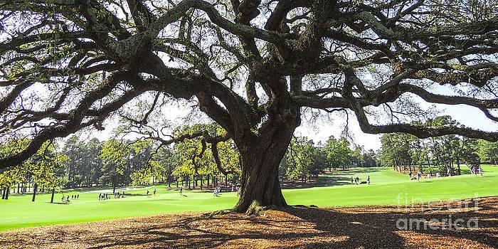 Under An Augusta Oak by L J Oakes