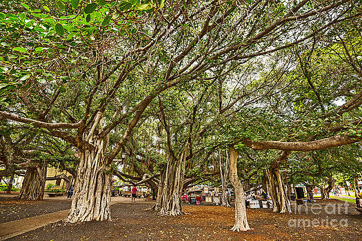 Jamie Pham - Under the Canopy - Banyan Tree Park in Maui.