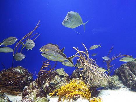 Under The Sea Photo by John Morris