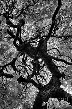 Under the Tree Canopy by Tiffany Rantanen