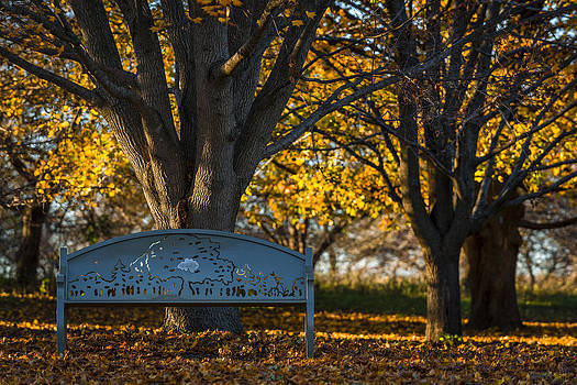 Under The Tree by Sebastian Musial