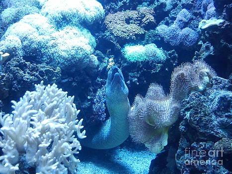 Under Water Life by Greg Davis