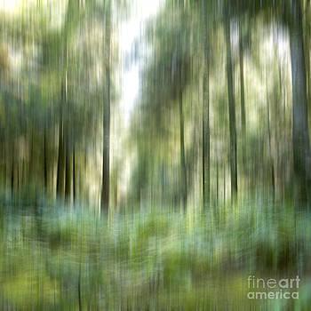 BERNARD JAUBERT - Undergrowth in spring.
