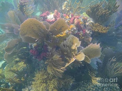 Adam Jewell - Underwater Colors