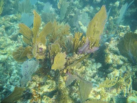 Adam Jewell - Underwater Fans