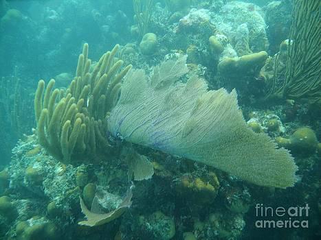 Adam Jewell - Underwater Forest