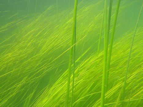Underwater green fields by Oliver Svob