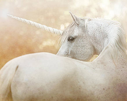 Unicorn of Narnia by Pamela Hagedoorn