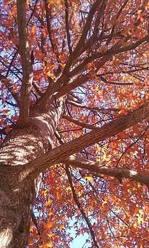 Up A Tree  by Kiara Reynolds