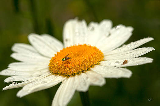 Karol  Livote - Upon A Flower