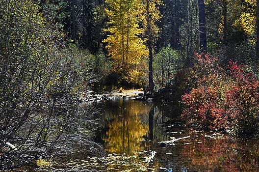 Lynn Bawden - Upper Truckee River Autumn