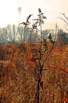 Carolyn Stagger Cokley - autumn grass6277