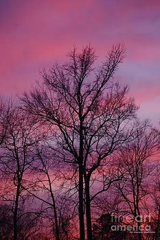 Tannis  Baldwin - Valentine Sunset A