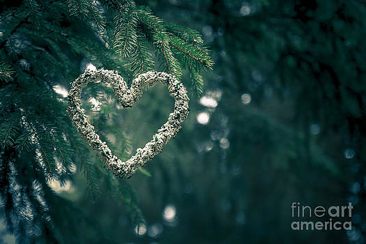 Valentine's Day in nature by Andreas Levi