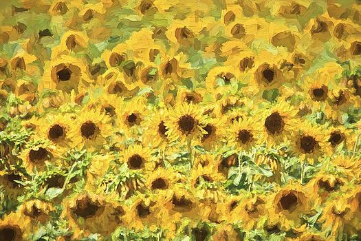 David Letts - Van Gogh Sunflowers