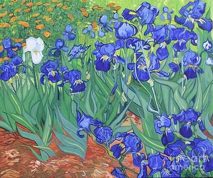 Van Gogh's Irises by Barbara Nolan