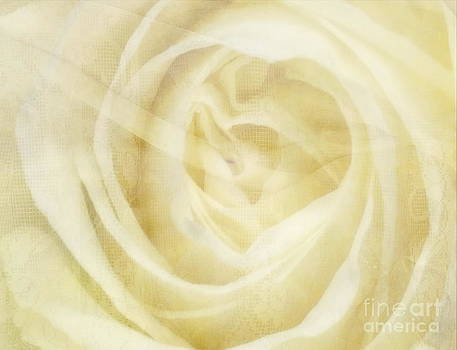 Andrea Kollo - Veiled Beauty