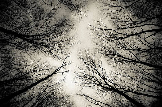 Veins Of Forest by Dockside Colors