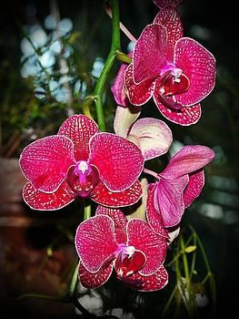 Velvet petals by Liudmila Di