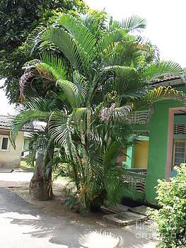 Venda Plants by Sunanda Yapa