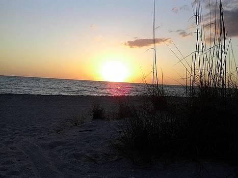 Venice Beach Sunset by Barry Miller