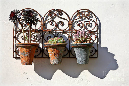 Kate McKenna - Vertical Cacti Garden