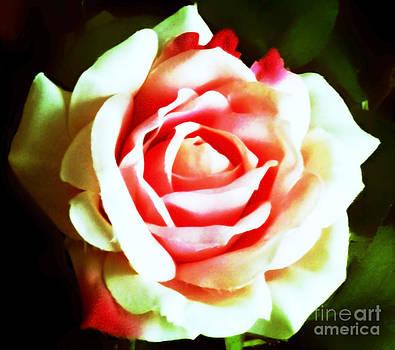 Vibrant Wedding Rose by Eddie Eastwood