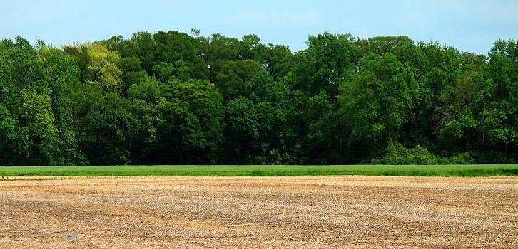 View Across the Field by Carolyn Ricks