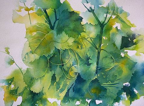 Vine leaves by Thomas Habermann