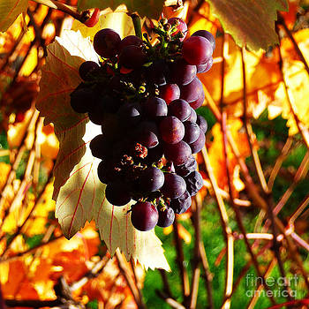 Xueling Zou - Vineyard 19