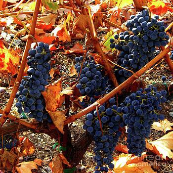 Xueling Zou - Vineyard 21