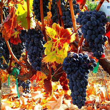 Xueling Zou - Vineyard 8