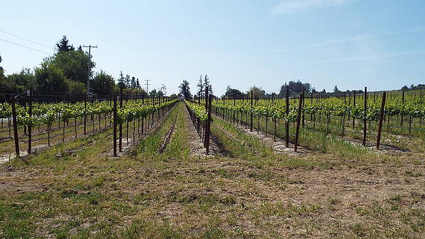 Vineyard by Brett Chambers