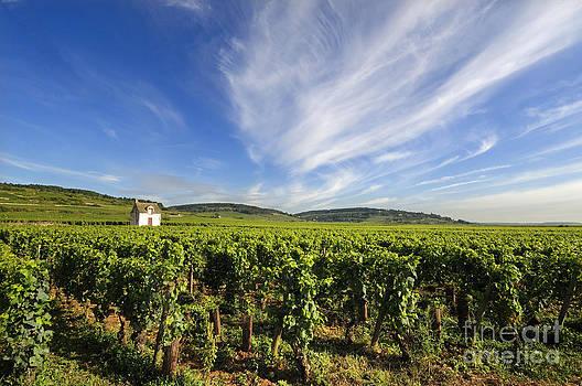 BERNARD JAUBERT - Vineyard hut. vineyard. Cote de Beaune. Burgundy. France. Europe