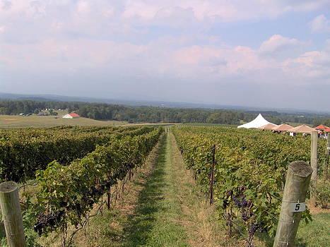 Shesh Tantry - Vineyard in NC