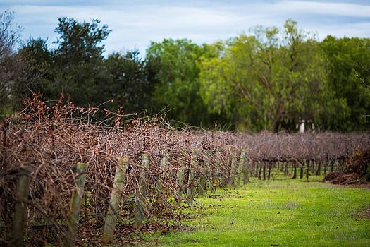 Vineyard in winter by Mike Lee