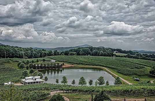 Vineyard. Northern Georgia. by Oleg Koryagin