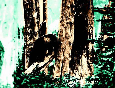 Vintage Bear in the Mount Rainier Forest early 1900 era... by Eddie Eastwood