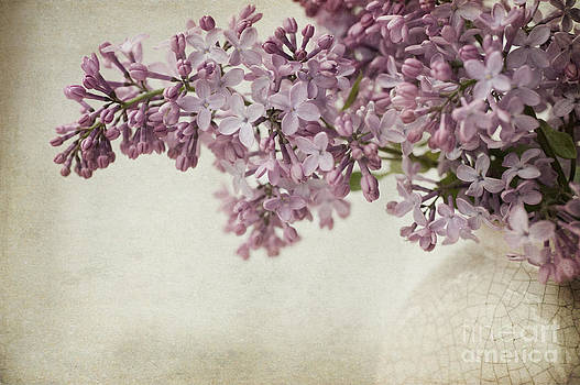 Vintage Lilac by Dolly Genannt