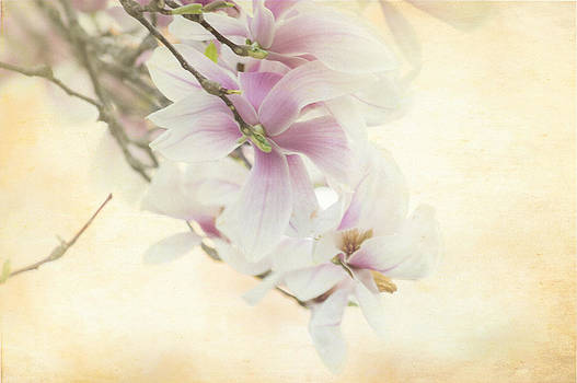 Vintage Magnolia by Tracy Munson