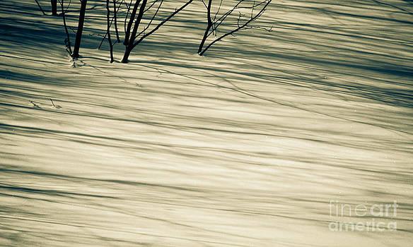 Vintage Shadows Intense by Tiffany Rantanen