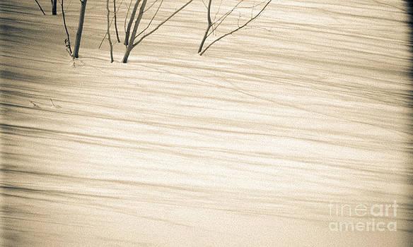 Vintage Shadows by Tiffany Rantanen