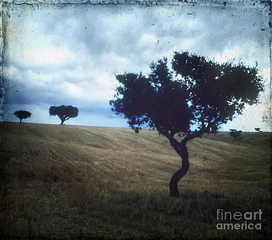 BERNARD JAUBERT - Vintage trees