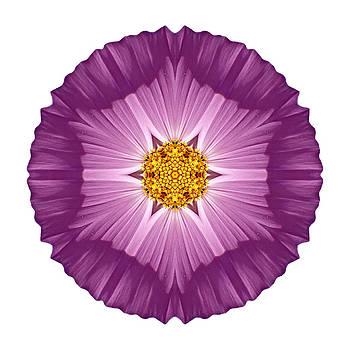Violet Cosmos II Flower Mandala White by David J Bookbinder