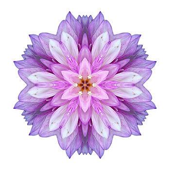 Violet Dahlia I Flower Mandala White by David J Bookbinder