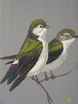 Violet Green Swallows by Jeannette Brown