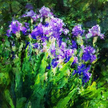 Violet Mood by Celso Bressan