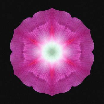 Violet Morning Glory Flower Mandala by David J Bookbinder